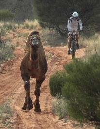 simon_camel